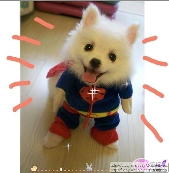 dog (5)
