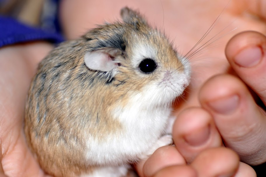 72 Cute and Funny Hamster Names  PetHelpful