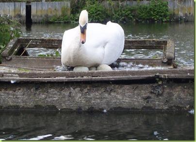 swan super crop