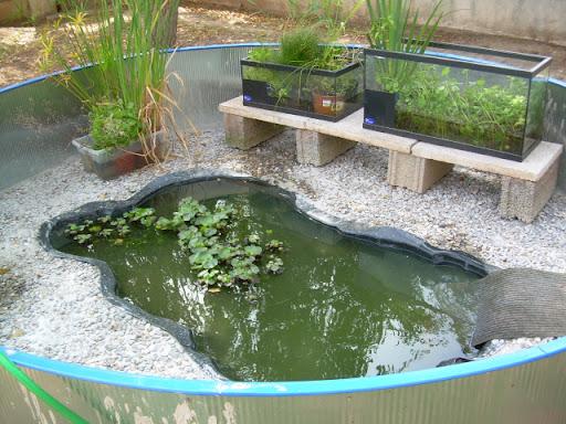 Nuevo estanque para tortugas de agua fotos for Estanques para agua