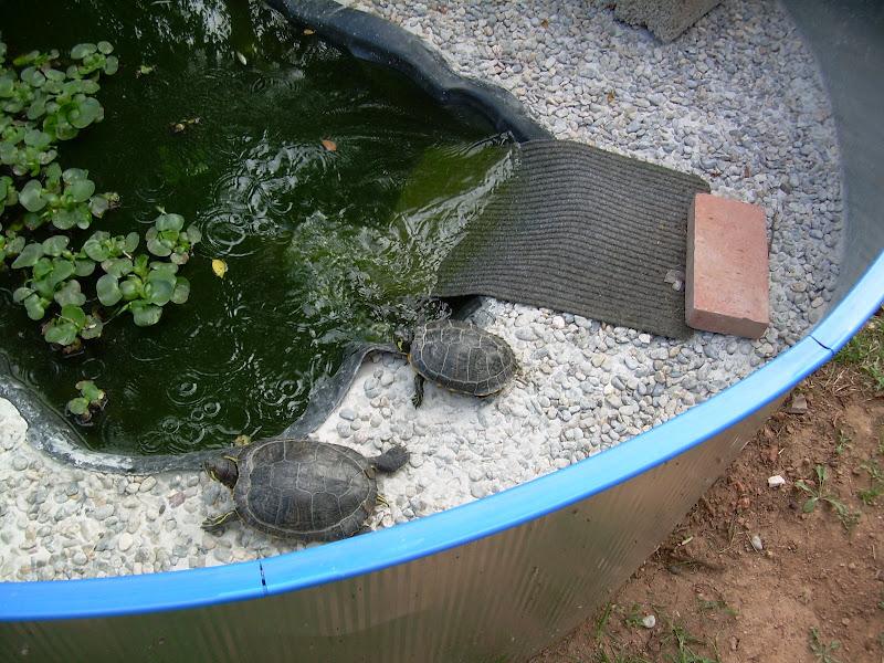 Nuevo estanque para tortugas de agua fotos for Estanques tortugas prefabricados