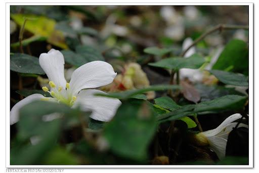 陰天●花兒●步道●Km