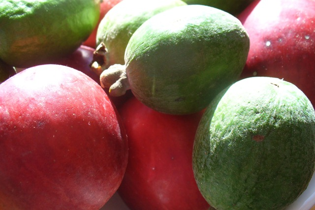fruit-2009