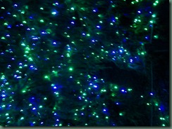 Lights at the Zoo (4)
