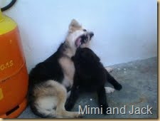 mimi and hitam