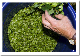 image of Lucky Lab's Hop Harvest 2007 courtesy of the oregonianphoto
