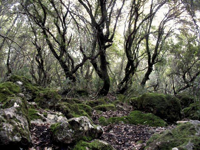 עצים רוקדים.jpg