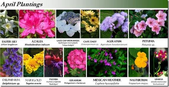 4-10_plantings[1]