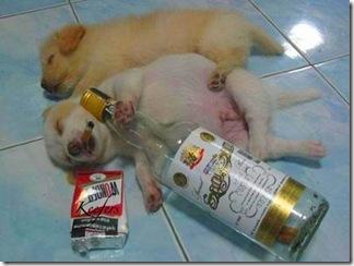 drunkdogs