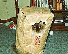 Un'abile spia dei servizi segreti, l'imprendibile Felix, abilmente nascosto nei sacchetti della spesa, mi spia in attesa della doccia