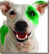 L'unione tra Laika e i Reptiliani genera una nuova stirpe di cani-rettili, adorabili ma letali