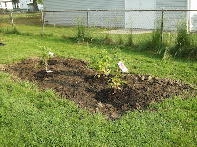blueberry and raspberry plot