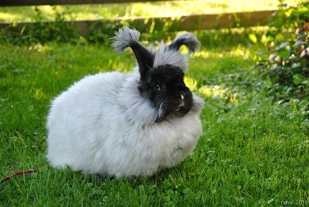 kaniner 040