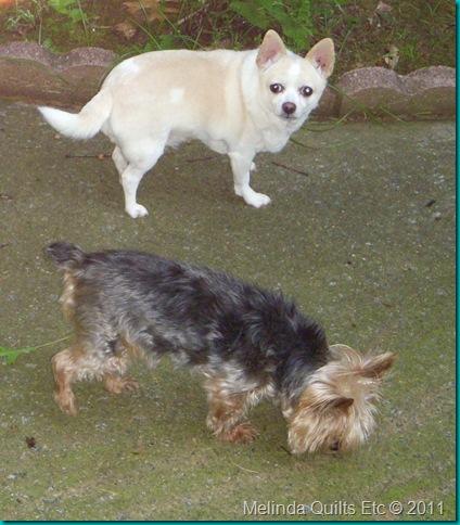 Max and Chula 0608