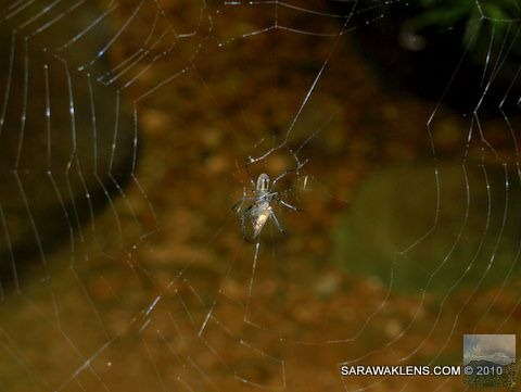 Spider_and_prey