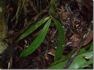 phalaenopsis orchid 5