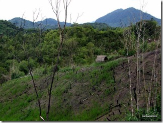 hill_paddy 1