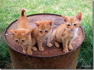 Three_Kittens_on_a_Barrel