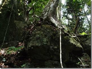 Limestone_hill_climb_091121_2
