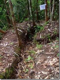 Japanese_trench_and_tunnel_1942_Gunung_Jagoi_3