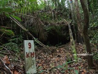 Teluk_Limau_trail_Bako_National_Park_09