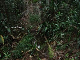 Teluk_Limau_trail_Bako_National_Park_12