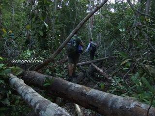 Teluk_Limau_trail_Bako_National_Park_17