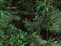 Teluk_Limau_trail_Bako_National_Park_21