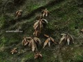 Teluk_Limau_trail_Bako_National_Park_32