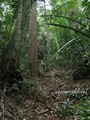 Teluk_Limau_trail_Bako_National_Park_36