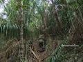 Teluk_Limau_trail_Bako_National_Park_43