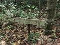 Teluk_Limau_trail_Bako_National_Park_51