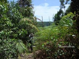 Teluk_Limau_trail_Bako_National_Park_66
