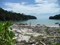 Teluk_Limau_trail_Bako_National_Park_70