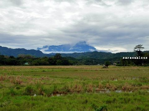 padi_sabah_gunung_kinabalu