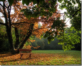 This_fall_pt_II__by_realityDream