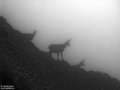 Bucegi in Septembrie - De la Babele la Varful Omu-Malaiesti-Diham. capre negre