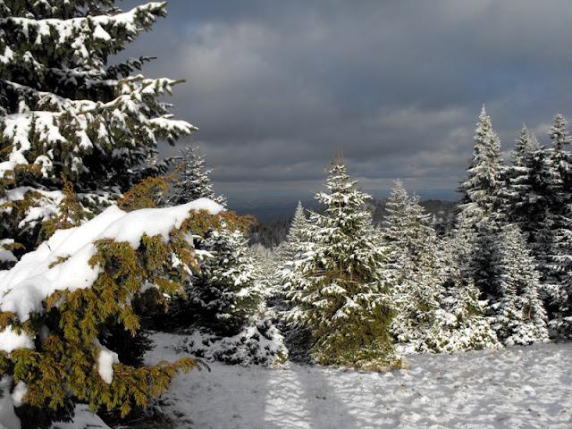 Ciucas - padurea iarna