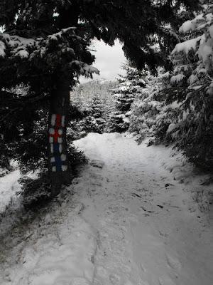 Ciucas. Prima ninsoare. Padurea de brazi