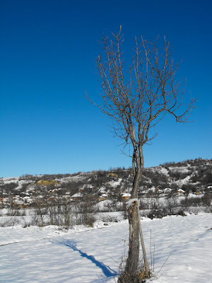 Tehomir. Iarna in sat. Copacul