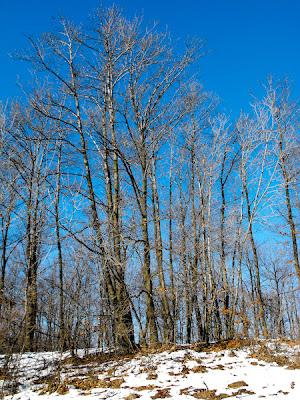 Tehomir. Padurea iarna