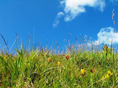 iarba si cer