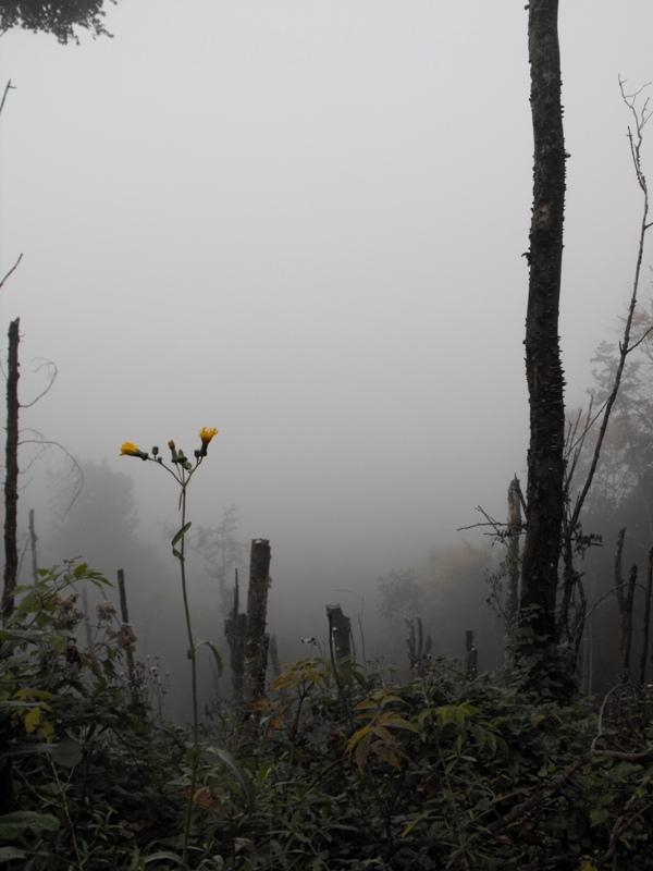 Muntii Trascaului. Padure in ceata