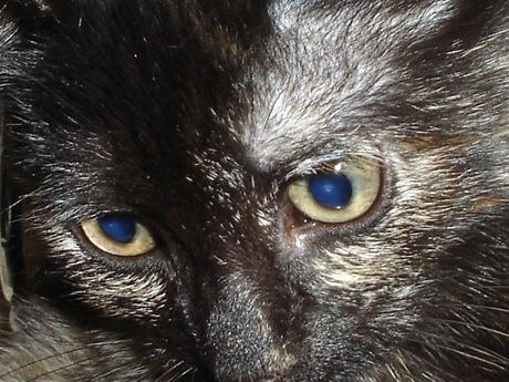 7# Gatto