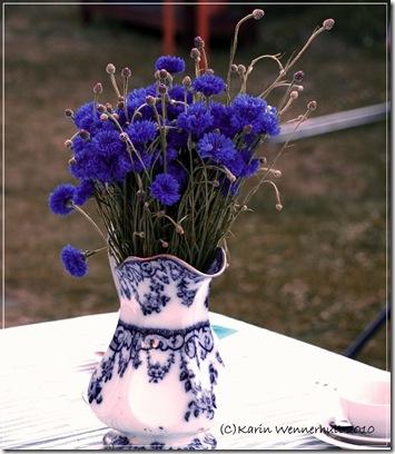 Blåklintivackervas