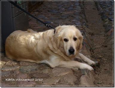 Hundenigenvägsgränden