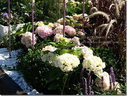 hortensiaostrå2 vtnm