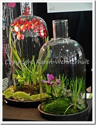 Orkideväxtkupor