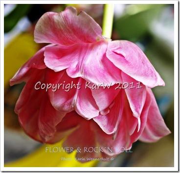 FlowerRocknRollSgn