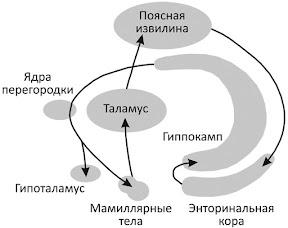 круг эмоций ПЕЙПЕЦА